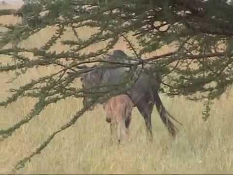 Serengeti Nationalpark Safari Tanzania 2005