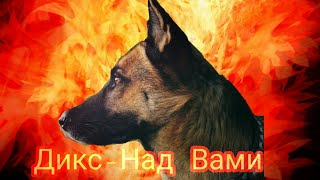 Дикс-Над Вами□Кошки против собак 2□Dix-Over you□Cats against Dogs 2□