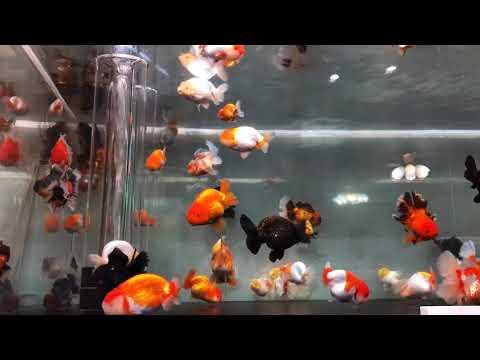 3000mm X 1500mm Big Goldfish Tank