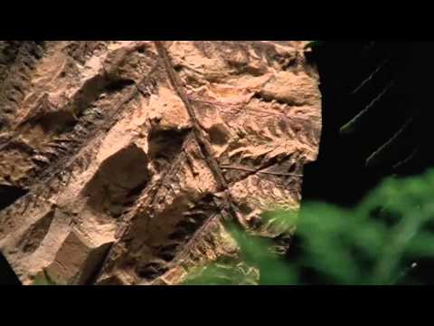 Shape of Life: How Arthropods Left the Sea