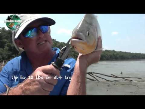 fishing 🎣 trip tucunare and payaras #riovichada #Riovichada #tucunare #trip #Colombia #pesca #fishi