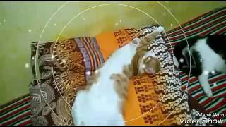 Dummy Challenge cats & Манекен челендж коты 😎😄
