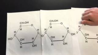 Dehydration Synthesis & Hydrolysis Reaction in Carbohydrates