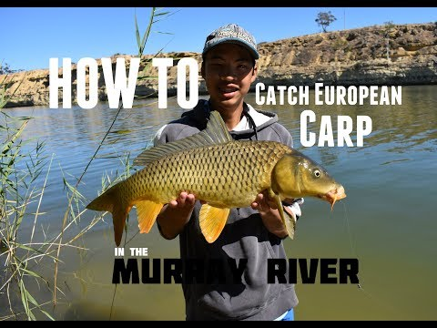 HOW TO: Catch European Carp | Murray River, SA