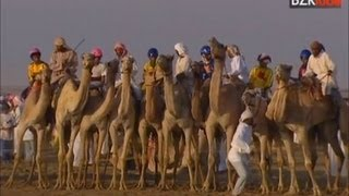 Camel Racing Children