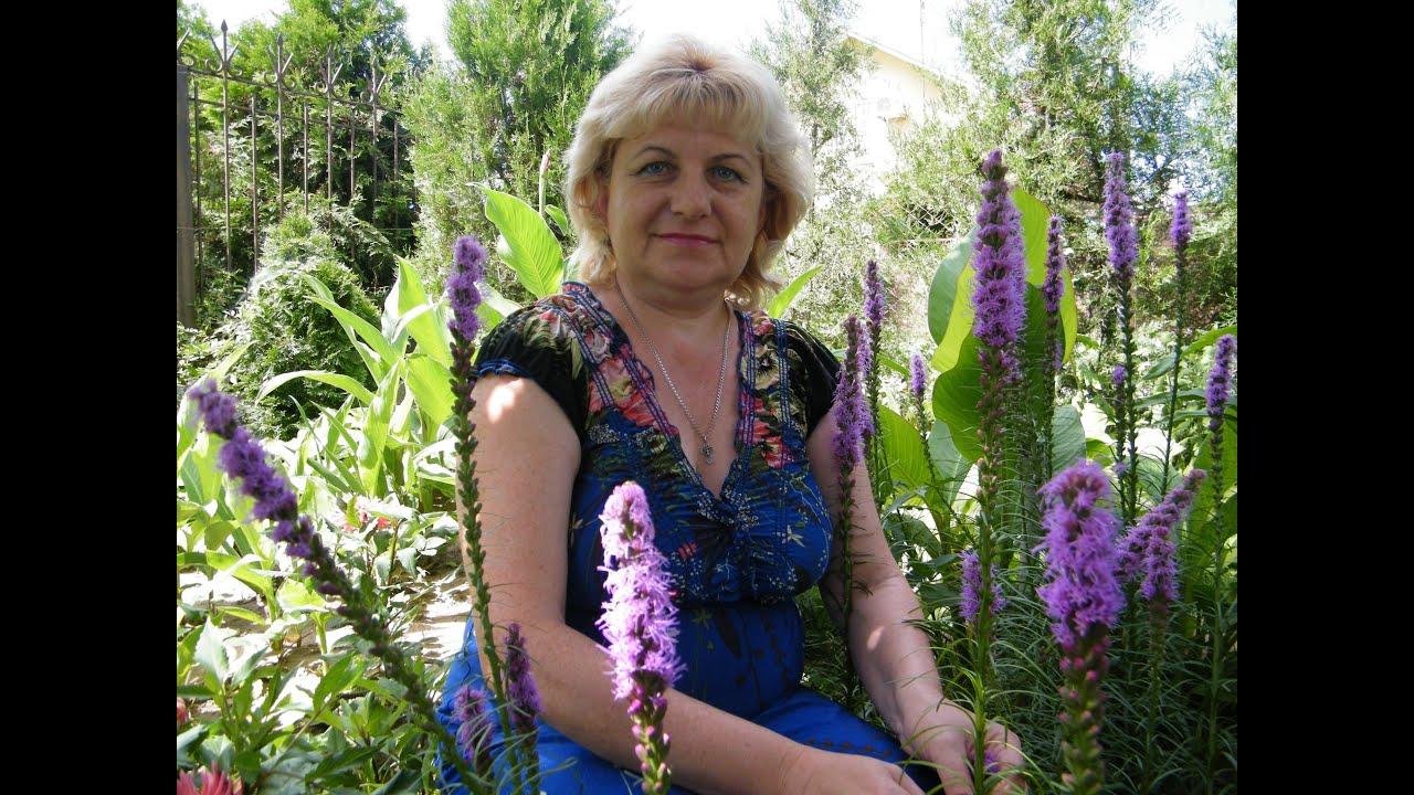 лиатрис выращивание из семян