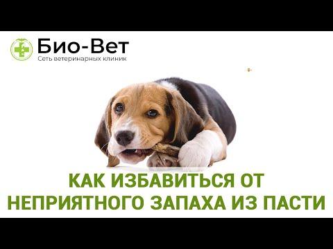 Неприятный Запах Из Пасти У Собаки& Как Избавиться От Неприятного Запаха Из пасти.Ветклиника Био-Вет
