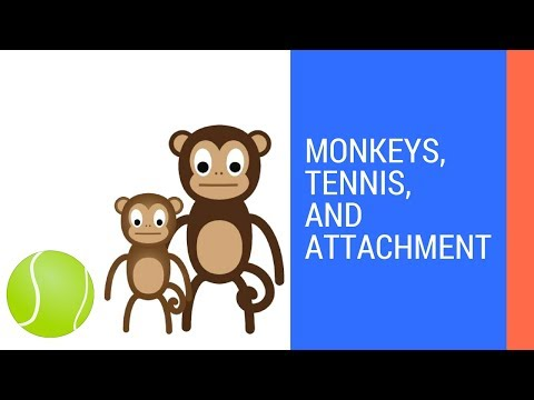 What is Attachment? | Harry Harlow's Monkeys