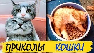 Кошки приколы юмор, прикольные коты / Cats jokes humor, funny cats