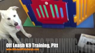 Door Manners! | German Shepherd Mix | Dog Trainer Pittsburgh