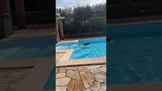 VIDEO Bagno in piscina per il labrador di Lady Zielinski