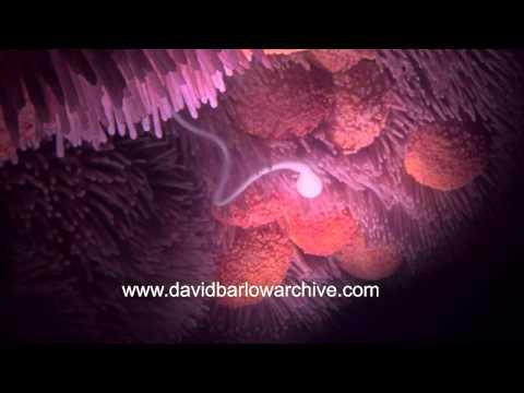 tube video Sperm
