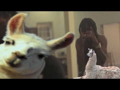 These bitches love llamas