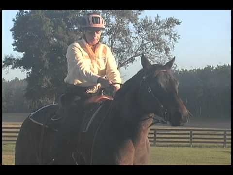 Emergency Stop on a Horse - Pulley Rein