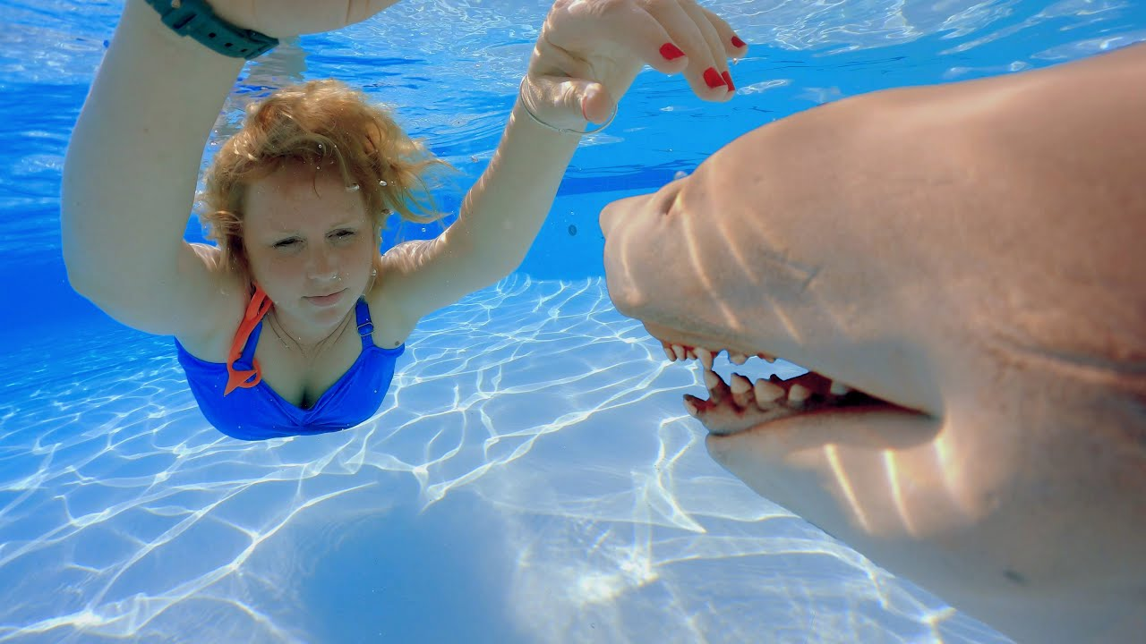 Shark in the Swimming Pool
