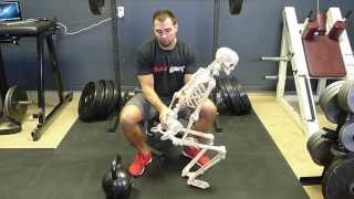 Glute and Pelvic Biomechanics & The Importance of Locking Out With the Glutes