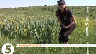 видео У Львові зацвіли іриси