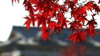 第31回「秋の一日 」