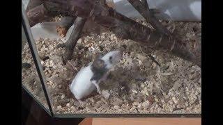 Будем ли мы заводить новых мышей?