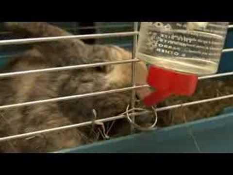 KnaagenKo knaagdierenopvang vol konijnen en cavia's