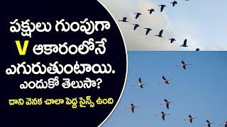 V Şeklinde Uçan Kuşlar Trending İnanılmaz Hile | Bir Telugu Kullanın