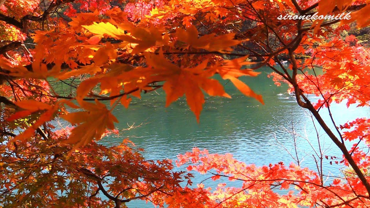 Beautiful Leaf Hd Wallpaper 2014年 日本の風景 福島県 紅葉の五色沼 Autumn Leves Amp Japanese Beautiful