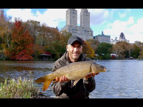 Carp in the City! (Central Park, NYC) - Carp fishing November 2018 blog