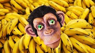 Bebe mono plátano | Canciones de animales l Canciones Infantiles con Tamiki Amiki