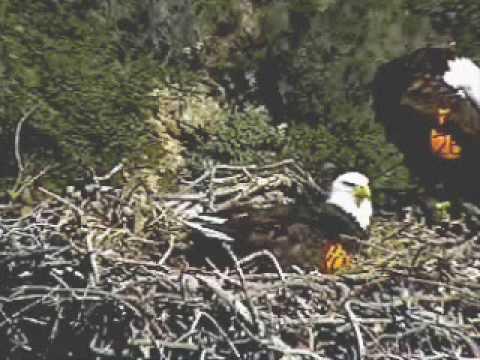 Pelican Harbor Nest Exchange 04/08/09 1:05 PM