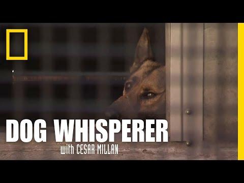 Reading Dog Behavior   Dog Whisperer