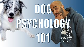 Dog Psychology 101