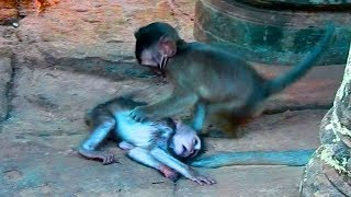 Hey! What Are These Baby Monkeys Doing ?  So Pity These Baby Monkeys Afraid Of Big Monkeys