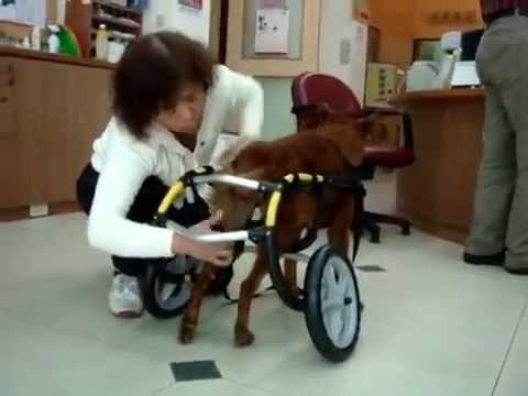 犬輪會社小黃的風火輪~(臺北市動物之家救援實錄) - YouTube