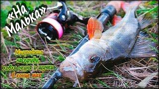 Микроджиг на пруду, ловля окуня и щучки весной в конце мая - ''На Малька''