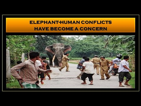 A Permanent & Definitive Solution to Mitigate Elephant-Human Conflict