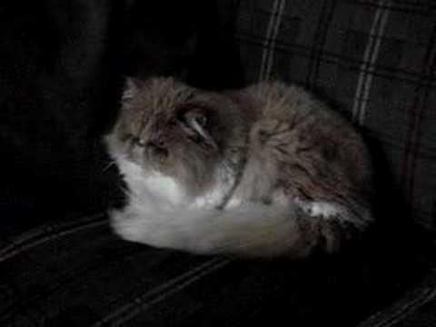 Pichie the cat