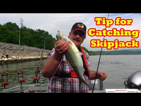 A Trick I Use To Catch Skipjack When They Are Slow To Bite