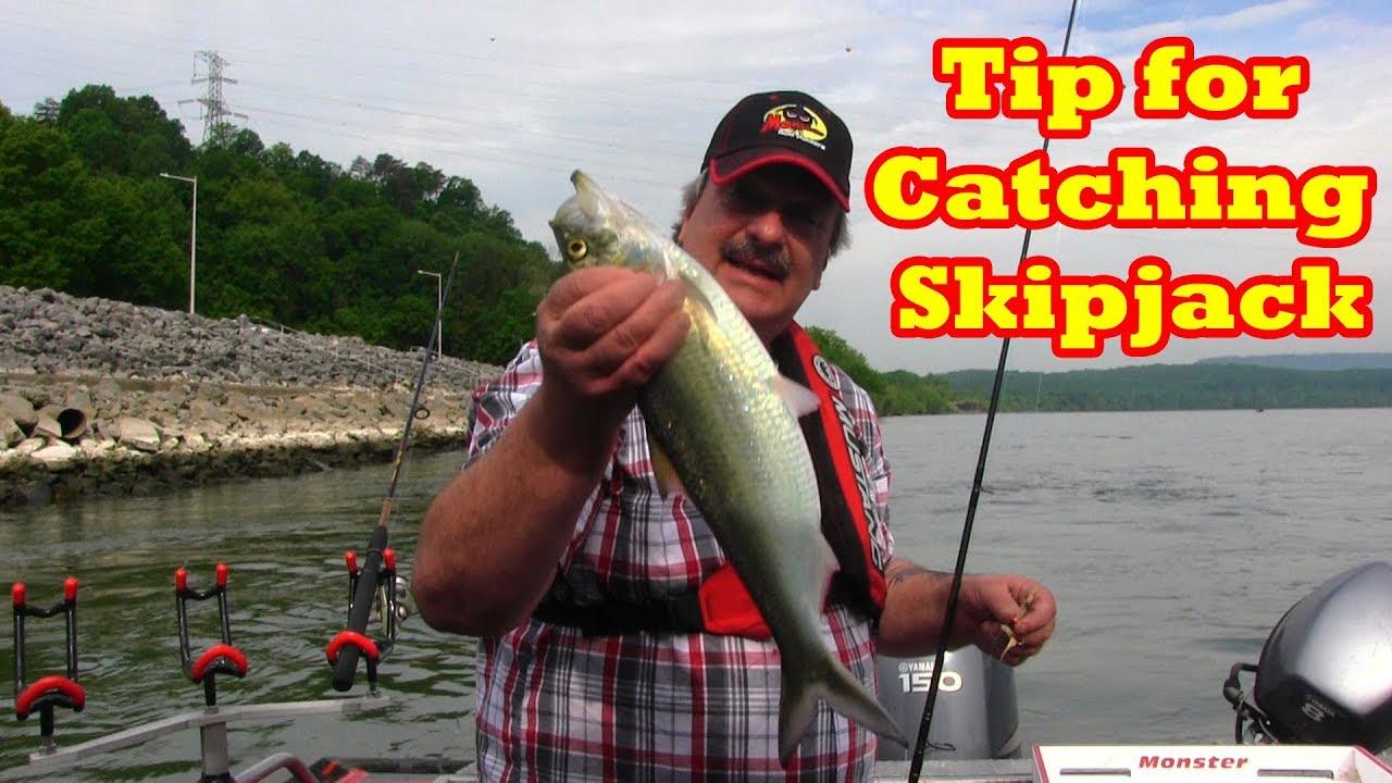 Fishing - Lure Colors Skipjack Tuna Like  Skipjack Minnow