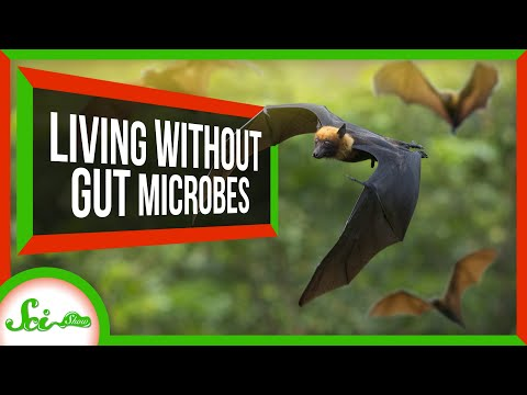 4 Animals That Don't Have Resident Gut Microbiomes