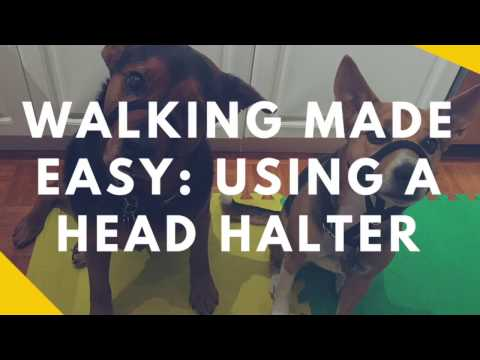 Walking Made Easy: Teaching Your Dog To Wear A Head Halter