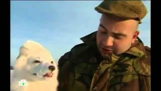 Дикий мир  ,,камчатка,сахалин,,фильм Тимофея Боженова