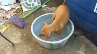 Flagra! Minha vizinha cachorra gostosa tomando banho (COMPLETO)