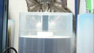 2009年10月5日、隠れてるつもりなのか、狭いところに座ってDVD の容器の...