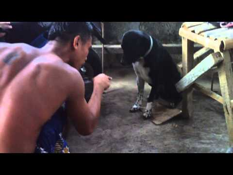 AMAZING DOG IN PHILIPPINES