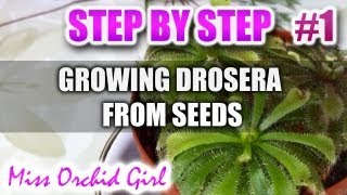 Growing Drosera carnivorous plants from seeds - Step by step - Part 1