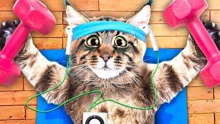 Go! Go! Go, CAT!