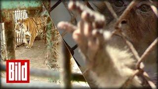 Der schlimmste Zoo der Welt macht dicht - In Gaza leiden Tiere