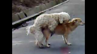 Животный инстинкт ( Animal instinct )