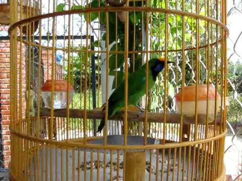 chim thanh tuoc.avi