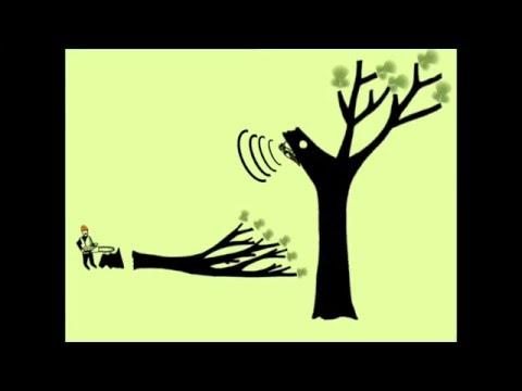 À la découverte des maisons dans les arbres - Alexandre Fouillet - Université du Québec à Montréal